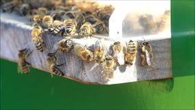 Honigbienen auf Bienenstock stock video