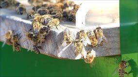 Honigbienen auf Bienenstock stock footage