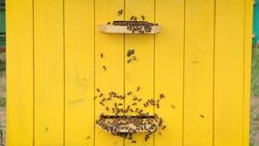 Honigbienen an einem Bienenstock stock video footage