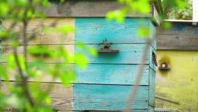 Honigbienen fliegen zum blauen Bienenstock stock video footage