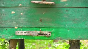 Honigbienen fliegen zum gr?nen Bienenstock stock footage