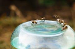 Honigbienen-Getränkwasser Lizenzfreie Stockbilder