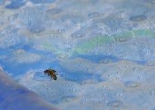 Honigbienen Stockbilder