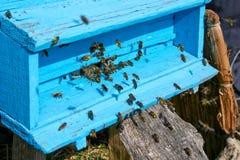 Honigbienen nahe einem Bienenstock, im Flug Stockfotos