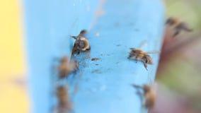 Honigbienen vor Bienenstock stock video footage