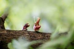 Honigbienenhintergrund Lizenzfreie Stockfotos