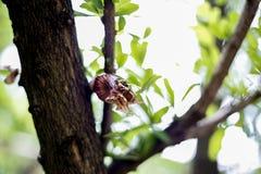Honigbienenhintergrund Stockfoto