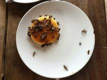 Honigbienenpfannkuchen Stockbild