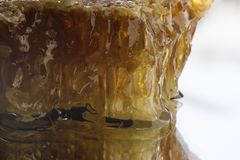 Honigbienenwaben Lizenzfreie Stockfotos