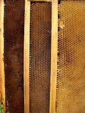 Honigbienenzellen lizenzfreies stockbild