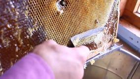 Honigbratenfett vom Honigschöpflöffel auf Bienenwabe, über gelbem Hintergrund Starker organischer Honig, der vom hölzernen Honig  stock video footage