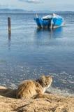Honigfarbene Katze wartet auf das Ufer Lizenzfreie Stockfotografie