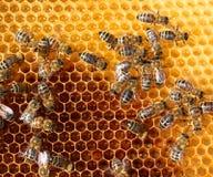 Honigkamm und Bienen Stockfoto