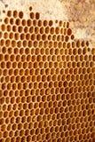 Honigkammhintergrund oder -beschaffenheit Stockbilder