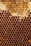 Honigkammhintergrund oder -beschaffenheit Lizenzfreies Stockbild