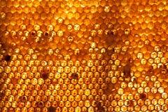 Honigkammhintergrund oder -beschaffenheit Stockbild