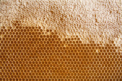 Honigkammhintergrund oder -beschaffenheit Lizenzfreies Stockfoto