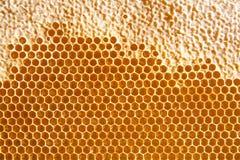 Honigkammhintergrund oder -beschaffenheit Lizenzfreie Stockbilder