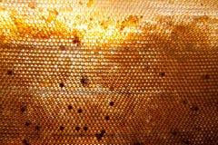 Honigkammhintergrund oder -beschaffenheit Stockfoto