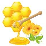 Honigschöpflöffel mit Bienenbienenwabe Stockbilder