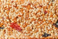 Honigstäbe mit Sesamstartwerten für zufallsgenerator Lizenzfreie Stockbilder