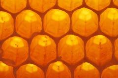 Honing-cel royalty-vrije stock afbeeldingen