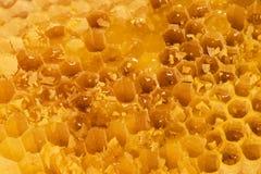 Honing in de kam Royalty-vrije Stock Afbeeldingen