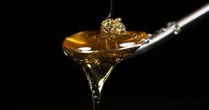 Honing die op lepel tegen zwarte achtergrond stromen, stock videobeelden