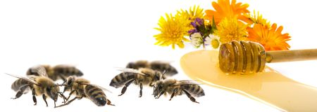 Honing en bijen royalty-vrije stock foto's