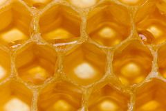 Honing in honingraat royalty-vrije stock afbeelding
