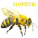 Honing, honingraat, zoete bij watercolor vector illustratie