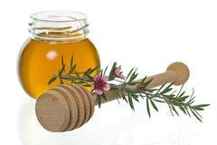 Honing met dipper en manukabloem (Leptospermum) Stock Foto's