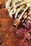 Honing, noten en de herfstbladeren Royalty-vrije Stock Afbeeldingen