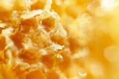 Honing op de Honingraatachtergrond Royalty-vrije Stock Afbeelding