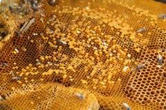 Honing van bijenkorf het maken Stock Foto's