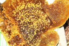 Honing van bijenkorf het maken Royalty-vrije Stock Foto