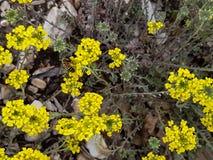 Honingbij op een gele bloem in het bos stock foto