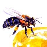Honingbij, op wit wordt geïsoleerd dat Royalty-vrije Stock Afbeeldingen