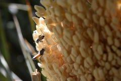 Honingbij vriendschappelijk op installaties stock foto's