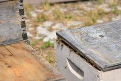 Honingbijen stock afbeelding
