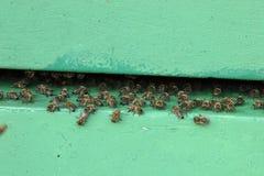Honingbijen bij de ingang aan een bijenkorf stock foto