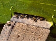 Honingbijen in bijenkorven 2 Stock Fotografie
