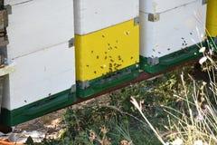 Honingbijen in een bijendoos die worden gehouden royalty-vrije stock fotografie