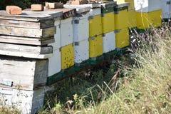 Honingbijen in een bijendoos die worden gehouden stock afbeeldingen