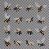 Honingbijvector op een transparante achtergrond wordt geplaatst die Vlakke 3d Vector isometrische illustratie Honings natuurlijk  Stock Foto's