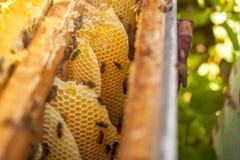 Honingraat, bijenkorfkader, ruw honingraatkader met honing Stock Foto's
