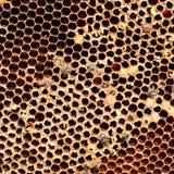 Honingraat die met honing wordt gevuld Stock Foto's