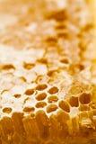 Honingraat die met honing wordt gevuld Stock Afbeeldingen