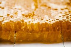Honingraat die met honing wordt gevuld Stock Afbeelding