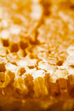 Honingraat die met honing wordt gevuld Royalty-vrije Stock Fotografie